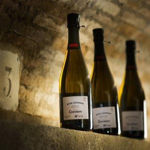Wine producer Codorníu moves registered office to La Rioja