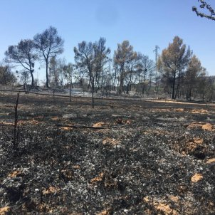 Catalonia wildfire under control after raging across Ribera d'Ebre for four days