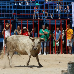 Catalan Parliament votes to ban 'correbous' bull runs