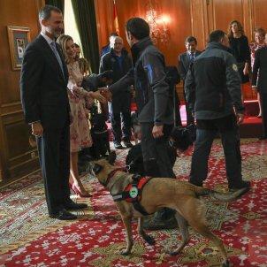 Letícia amb gossos 2  GTRES
