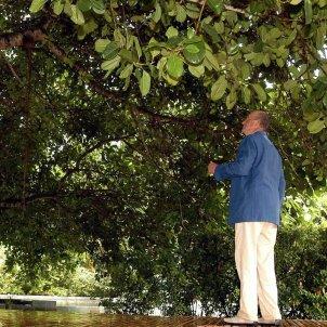 joan carles arbre efe