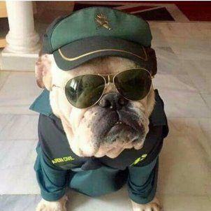 Gos Guàrdia Civil @guardiacivil