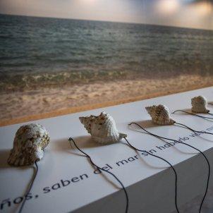 Expo Museu Maritim professor cargols de mar - Sergi Alcazar