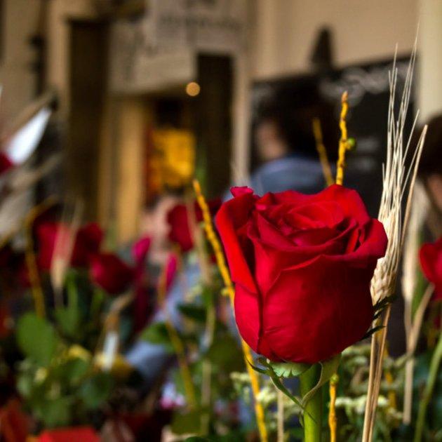 Rosa Sant Jordi ACN