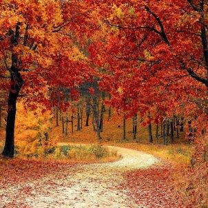 tardor bosc pixabay