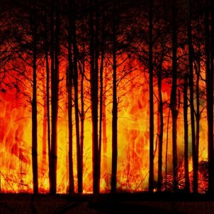 foc bosc pixabay