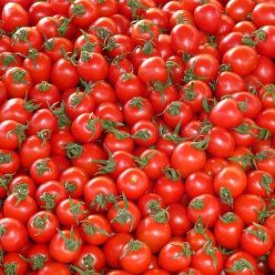 tomaquets pixabay