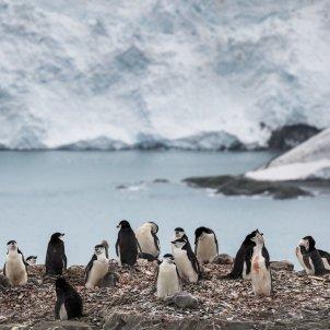Antàrtida pingüins EFE