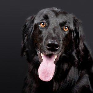 gos Portades borden mosseguen pixabay