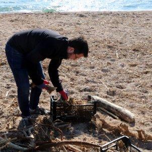 Pere Aragones neteja platja - ACN