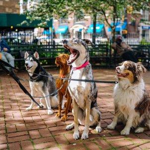 gossos - unsplash