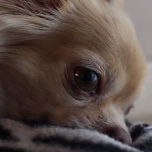Laia Hinojosa - Cuidar dels gossos durant el confinament