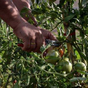 fruitalpuntbio tomata eco merce coronavirus