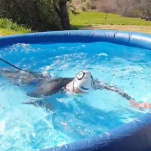 nedadora piscina plastic coronavirus @srouwendaal