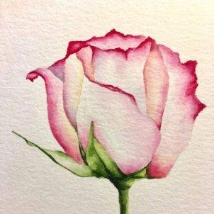 rosa dibujo