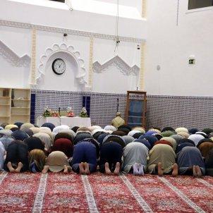 mesquita salt ACN