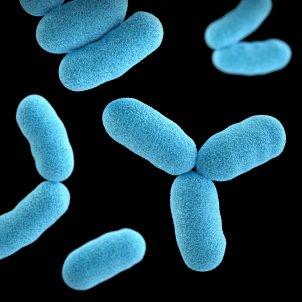 Bacteria Unsplash