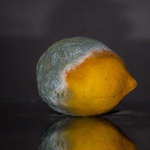 Fruita podrida (Dimitris Vetsikas)
