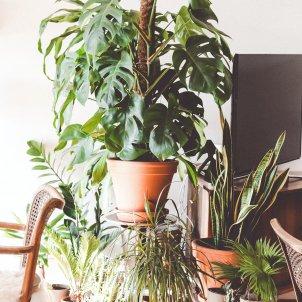 plantes unsplash