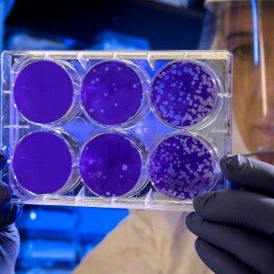 Científics xinesos alerten d'una nova soca potencial pandémic unsplash
