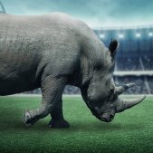 Futbol americà NFL jugador contra rinoceront (Sasha Nebesuyk)