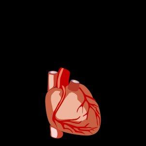 Corazón sobre fondo negro