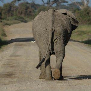 elefant memoria amnesia pixabay