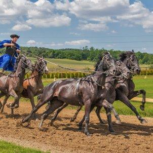 cavalls cursa acrobacia pixabay
