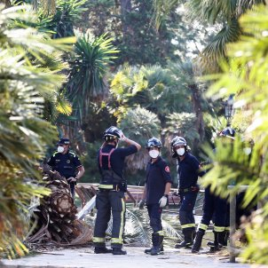 mort palmera parc de la ciutadella - Efe