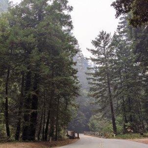 sequoies milenàries california EFE