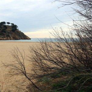 La platja de Castell de Palamós, una de les poques que encara queden verges a la Costa Brava. Foto: ACN