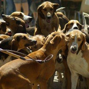 molts gossos   pixabay