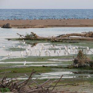 Desembocadura Tordera - Cristina Clos
