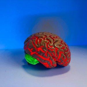 cervell unsplash
