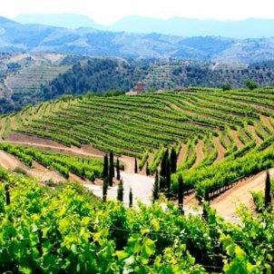 les terres del vi del priorat