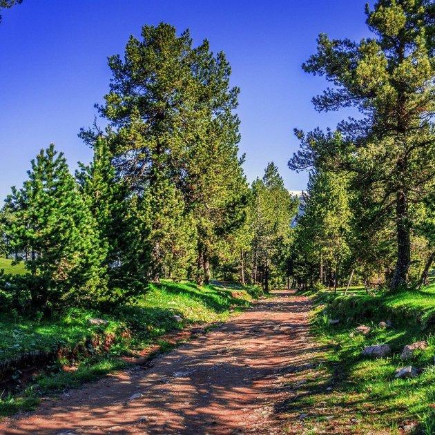 camino montaña   unsplash