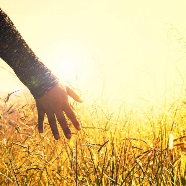 manos campo   pixabay