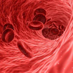 Sangre en una vena