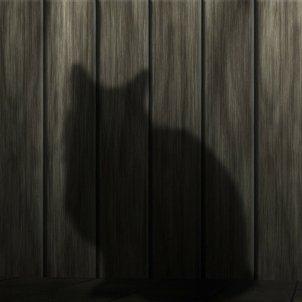 gran silueta gat pixabay