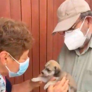 Vídeo viral perro / andreeahijar