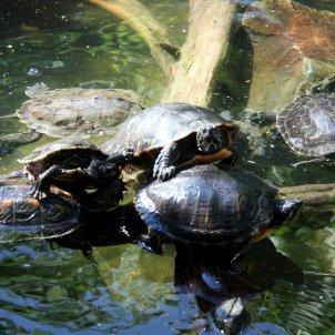 tortugues alt emporda ACN