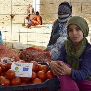 tomaquets marroc sahara
