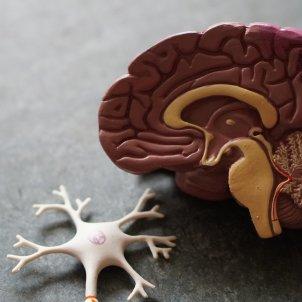 cerebro plástico unsplash