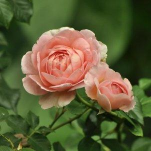 Flors flores (Светлана Бердник)