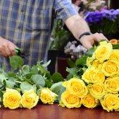 Roses Sant Jordi Laura Gómez
