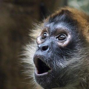 sorpresa mico Imagen de LukasBasel en Pixabay