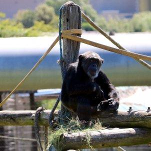 primats centre girona riudellots ACN