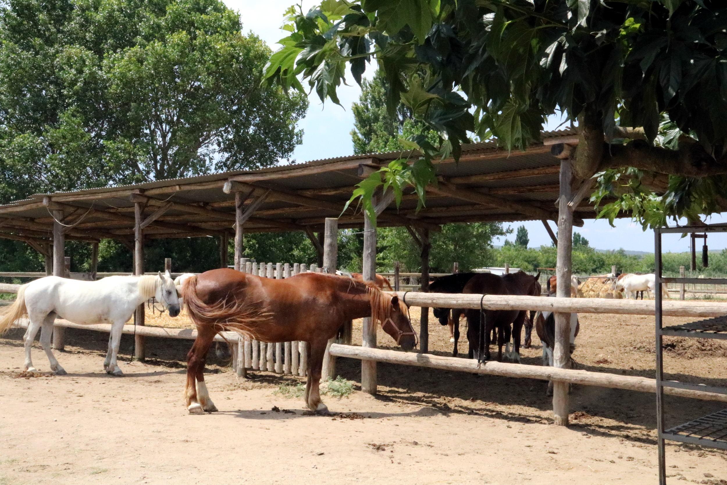 Cavalls hípica ACN