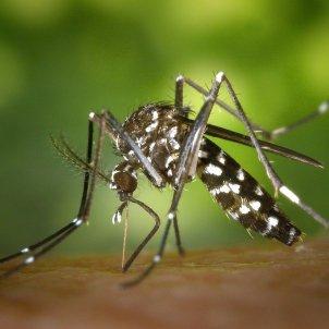 Mosquit virus Ziga ACN