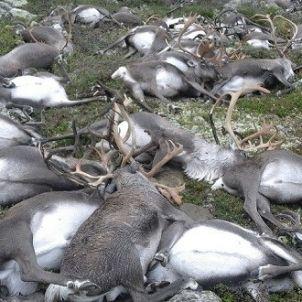 rens morts noruega reuters